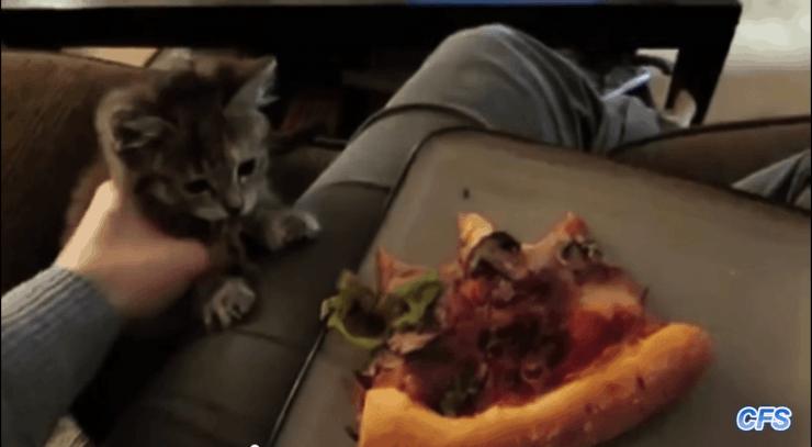 סרטוני חתולים