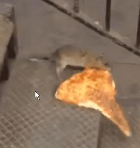 עכבר אוכל פיצה