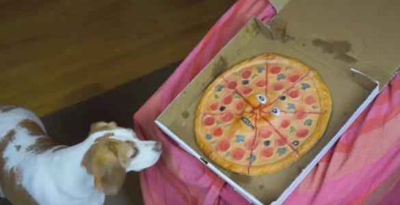 כלבים נגד פיצה