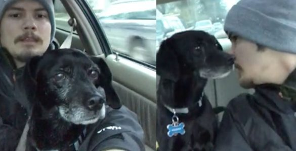 שליח פיצה הציל כלב